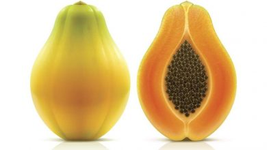 Photo of Papaya nedir ?